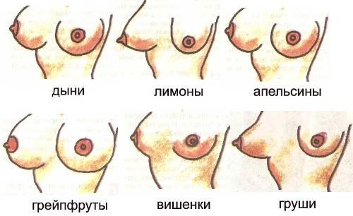 Темперамент женщины зависит от формы груди.